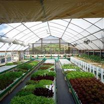 智慧农业种养殖系统鱼菜共生温室大棚
