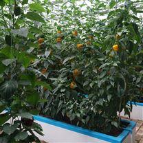 城市现代农业 基质培薄膜温室 蔬菜大棚