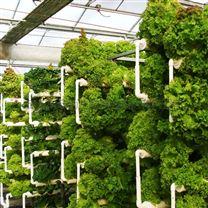 城市现代农业 大型水培温室 瓜果蔬菜大棚