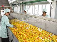 桃、杏、李加工生産線