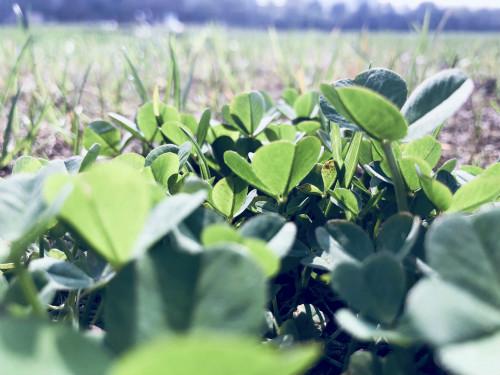 智能化控制的现代温室,助力农作物培育和生长